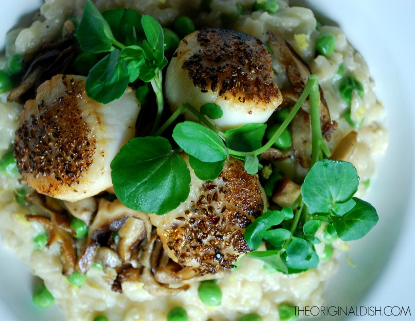 Anise Seared Scallops with PeaRisotto
